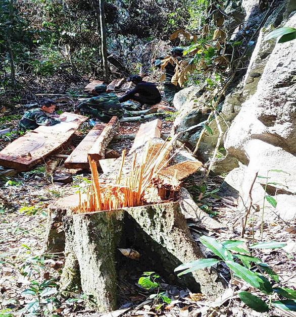 Khởi tố thêm 6 người trong vụ phá rừng ở Vườn quốc gia Phong Nha - Kẻ Bàng - Ảnh 1.