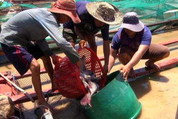 Dân nuôi cá trên sông La Ngà mất hơn 330 tấn - Ảnh 3.
