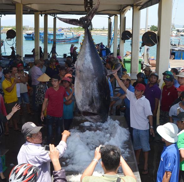 Thành lập Ban Chỉ đạo quốc gia về chống khai thác hải sản bất hợp pháp - Ảnh 1.