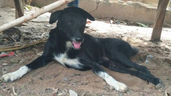 Chú chó 3 chân cứu sống bé trai sơ sinh bị 'mẹ nhí' 15 tuổi chôn sống - Ảnh 2.