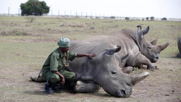 Đủ mọi chiến dịch, vì sao người Việt Nam vẫn mua sừng tê giác? - Ảnh 1.
