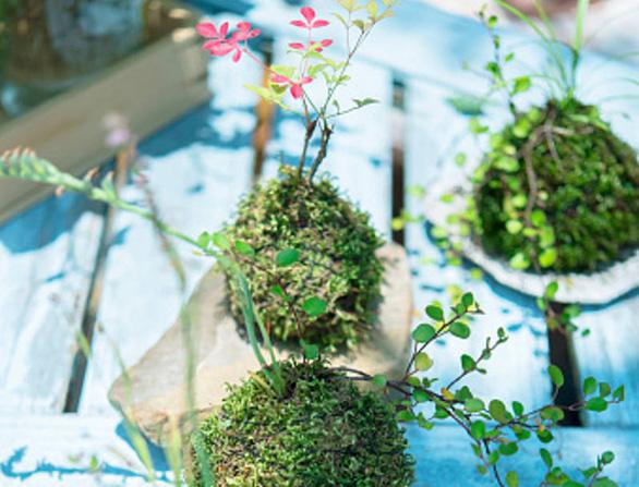 Tô điểm không gian sống với nghệ thuật trồng cây Kokedama của người Nhật - Ảnh 3.
