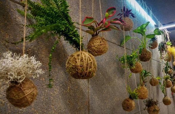 Tô điểm không gian sống với nghệ thuật trồng cây Kokedama của người Nhật - Ảnh 9.