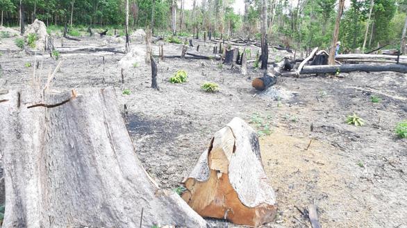 5 năm, Gia Lai mất trên 7.700 ha rừng tự nhiên - Ảnh 1.