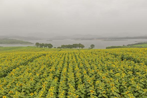 Cùng nông dân đánh thức tiềm năng vùng đất 'chưa mưa đã lụt, chưa nắng đã hạn' - Ảnh 2.