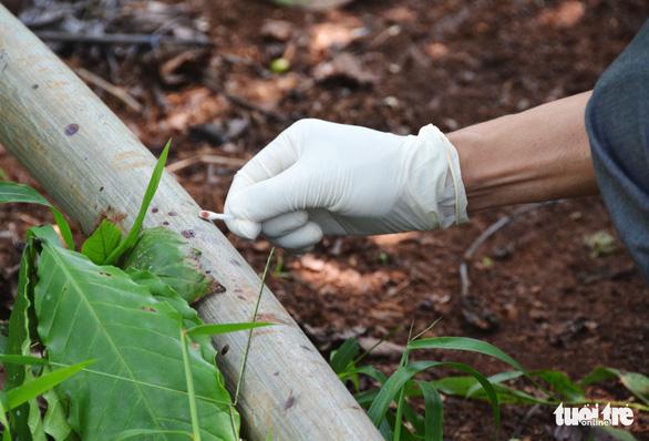 Bắt nữ nghi phạm tàn bạo chém chết 3 bà cháu, giấu thi thể trong vườn bơ - Ảnh 5.