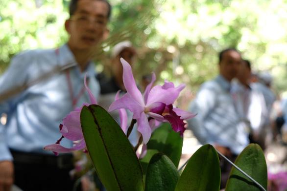 Lan khoe sắc quý phái ở Nha Trang - Ảnh 7.