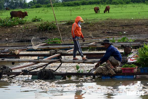 Cá bè chết tại La Ngà: Thông số ô nhiễm hữu cơ vượt chuẩn nhiều lần - Ảnh 2.