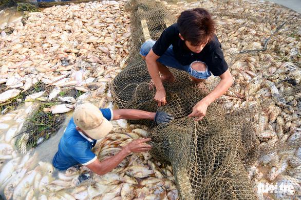 450 triệu đồng quy hoạch lại vùng nuôi cá bè trên hồ Trị An - Ảnh 2.