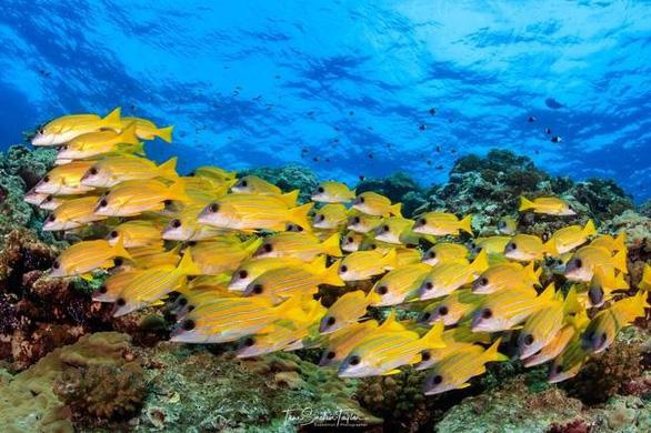 Loài cá nhỏ nhất thế giới 'cứu' những dải san hô - Ảnh 1.