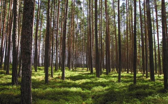 Học sinh Philippines phải trồng 10 cây xanh trước khi tốt nghiệp - Ảnh 2.