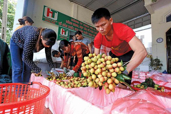 Vải thiều Lục Ngạn có mặt tại 700 điểm bán của Saigon Co.op - Ảnh 3.