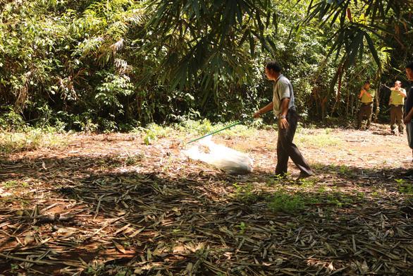 Cặp rắn hổ mây 'khủng' đã về rừng Đồng Nai - Ảnh 2.