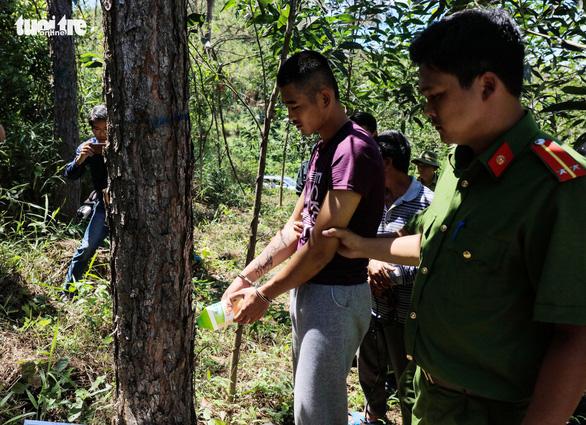 Hạ độc 3.500 cây thông: mỗi cây bị diệt chỉ trong một phút - Ảnh 3.