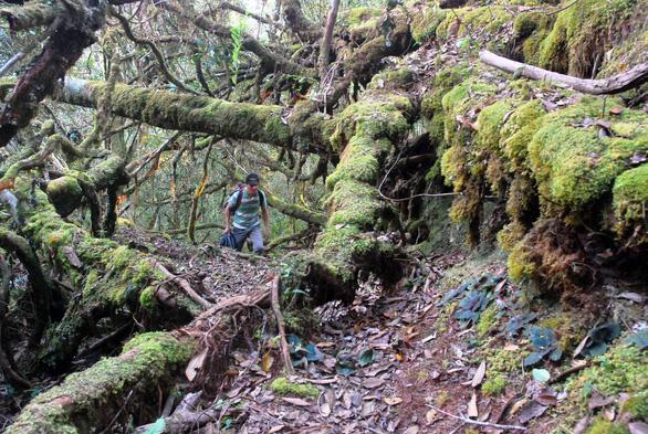 Khám phá rừng đỗ quyên - Kỳ 1: Hành trình 10 tiếng leo núi - Ảnh 4.