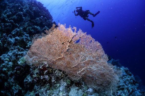LHQ cảnh báo nguy cơ 1 triệu loài bên bờ vực tuyệt chủng - Ảnh 1.