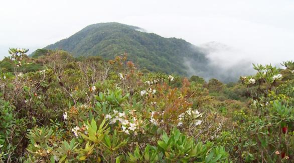 Khám phá rừng đỗ quyên - Kỳ 2: Lạc vào vương quốc đỗ quyên - Ảnh 3.