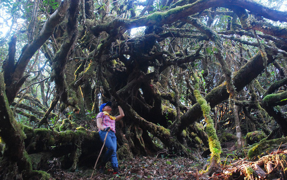 Khám phá rừng đỗ quyên - Kỳ 2: Lạc vào vương quốc đỗ quyên - Ảnh 4.