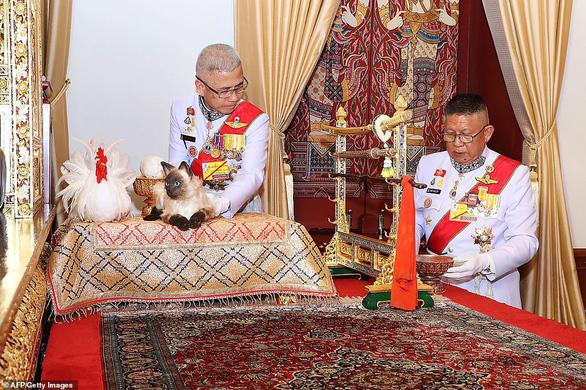 Con mèo Xiêm trong lễ đăng cơ của vua Thái là mèo giả hay thật? - Ảnh 1.