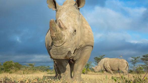 Con người đang khiến các loài tuyệt chủng nhanh gấp 1.000 lần - Ảnh 3.