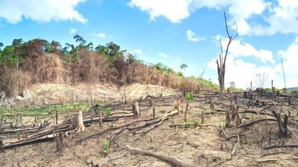 Con người đang khiến các loài tuyệt chủng nhanh gấp 1.000 lần - Ảnh 1.