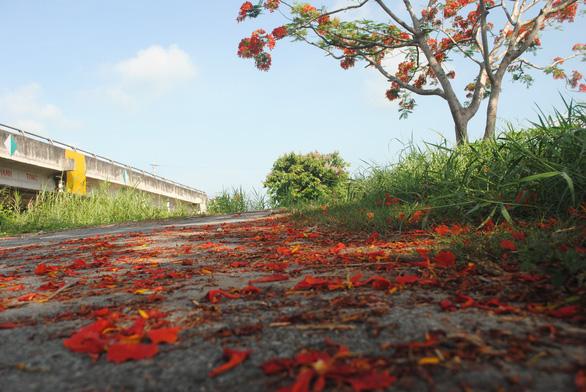 Ngỡ ngàng đường phượng bay dài 4 cây số ở Lấp Vò - Ảnh 7.