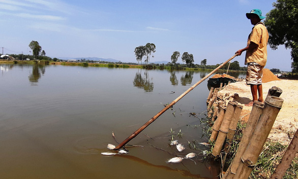 Cá chết trắng sông Bàn Thạch, do sông nhiễm mặn hay ô nhiễm? - Ảnh 1.