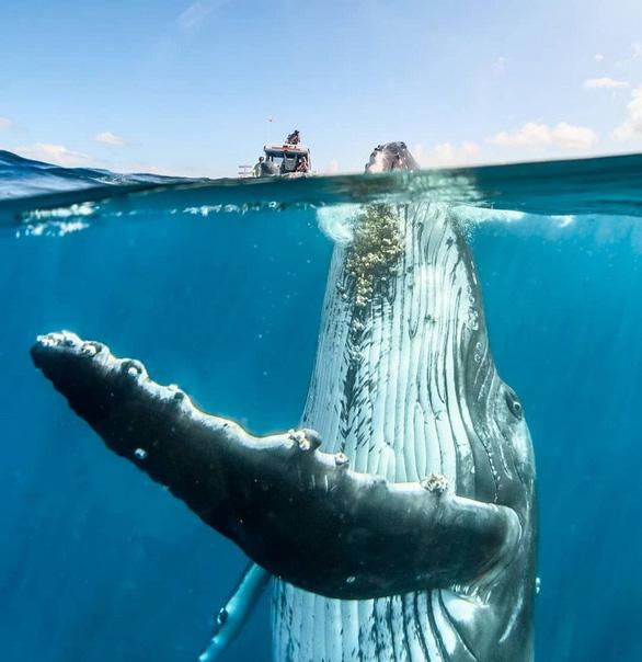 Nghẹt thở ảnh đẹp thiên nhiên từ cuộc thi National Geographic Travel - Ảnh 1.