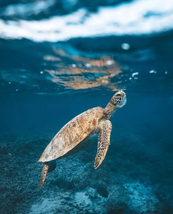 Nghẹt thở ảnh đẹp thiên nhiên từ cuộc thi National Geographic Travel - Ảnh 8.