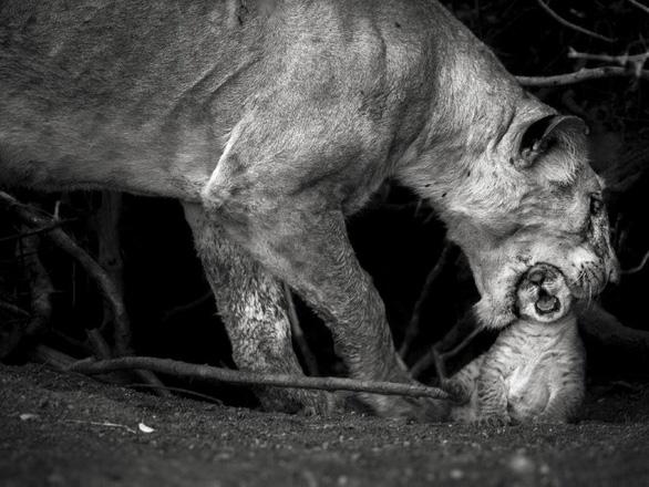 Nghẹt thở ảnh đẹp thiên nhiên từ cuộc thi National Geographic Travel - Ảnh 3.