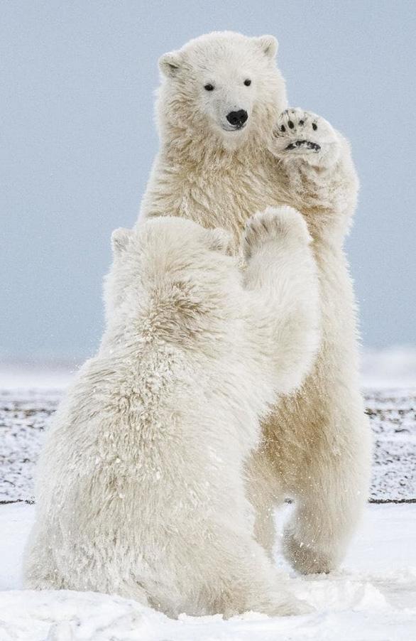 Nghẹt thở ảnh đẹp thiên nhiên từ cuộc thi National Geographic Travel - Ảnh 4.