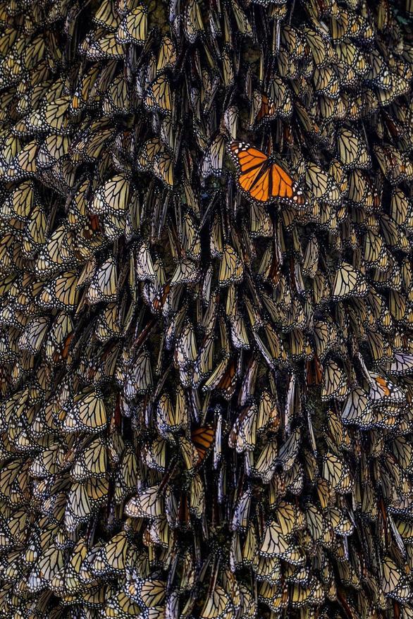 Nghẹt thở ảnh đẹp thiên nhiên từ cuộc thi National Geographic Travel - Ảnh 9.