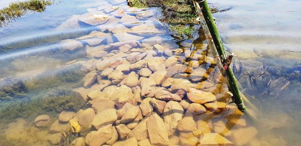 Dân cắm cọc tre, dựng rào tre ngăn sông chống cát tặc - Ảnh 6.