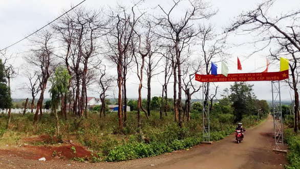 Thủ tướng yêu cầu Bộ Công an vào cuộc vụ bức tử rừng thông chiếm đất - Ảnh 1.
