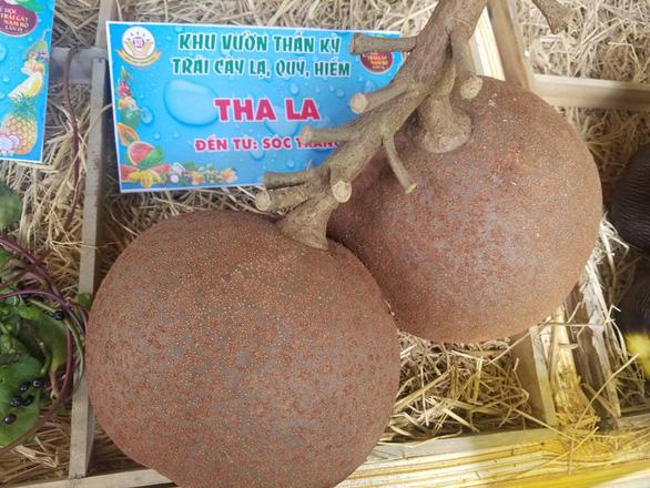 Ngắm bí ngô khổng lồ 100kg, dừa khủng 15kg... tại Suối Tiên - Ảnh 2.