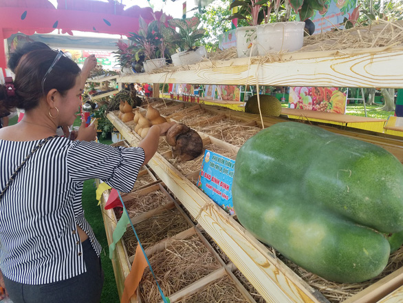 Ngắm bí ngô khổng lồ 100kg, dừa khủng 15kg... tại Suối Tiên - Ảnh 5.