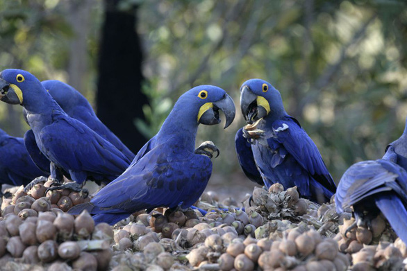 Báo động tội phạm buôn lậu chim quý bằng cách… trộm trứng - Ảnh 1.