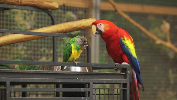 Báo động tội phạm buôn lậu chim quý bằng cách… trộm trứng - Ảnh 3.