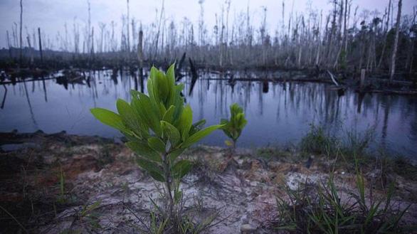 600 loài thực vật biến mất, đe dọa cả sự sinh tồn của con người - Ảnh 1.