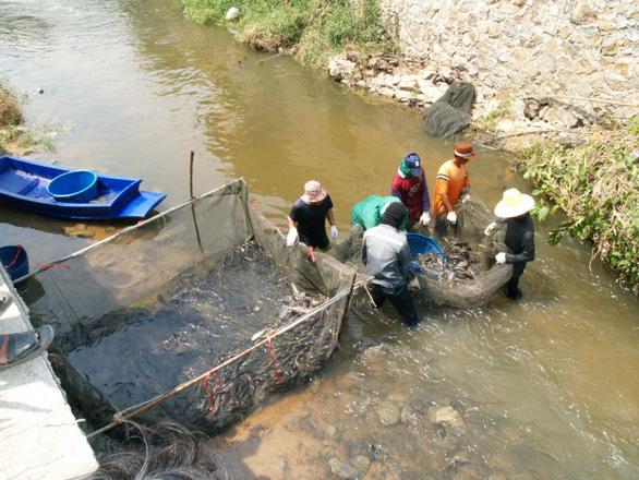 Cá lau kính tràn ngập, Thái Lan mời đầu bếp chỉ dân cách ăn - Ảnh 1.