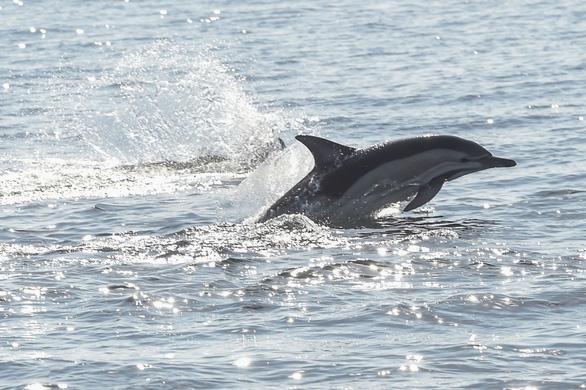 Canada cấm đánh bắt và nuôi nhốt cá voi, cá heo phục vụ giải trí - Ảnh 1.