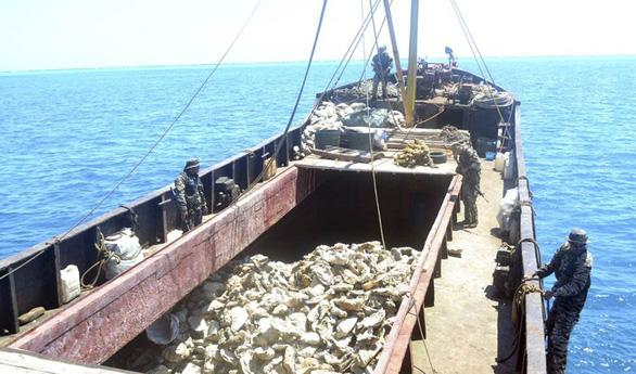 Dân Philippines la làng vì đội tàu bắt sò tai tượng của Trung Quốc - Ảnh 1.