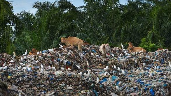 Đến lượt Indonesia trả lại rác cho Mỹ - Ảnh 1.