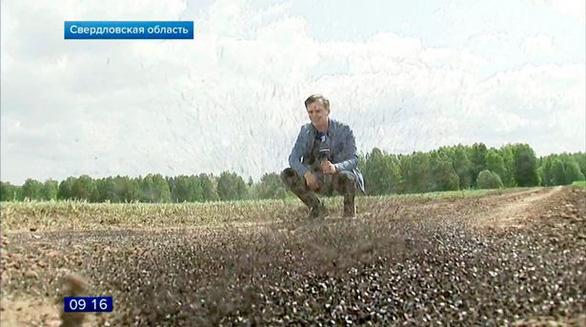 Dân miền núi Nga khốn đốn vì ruồi phủ kín bầu trời - Ảnh 3.