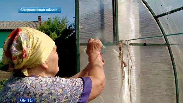 Dân miền núi Nga khốn đốn vì ruồi phủ kín bầu trời - Ảnh 2.