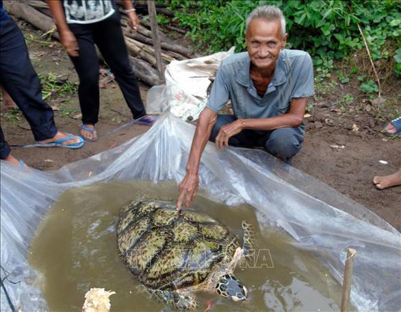 Bất ngờ bắt được rùa biển 34kg trên sông miền Tây - Ảnh 1.