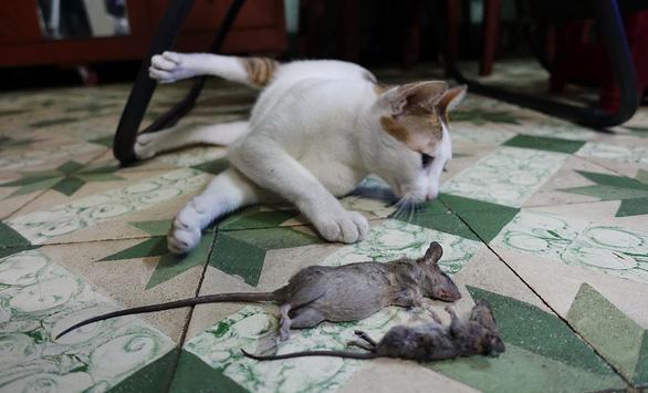 Nhiễm trùng tiêu hóa do... chuột - Ảnh 1.