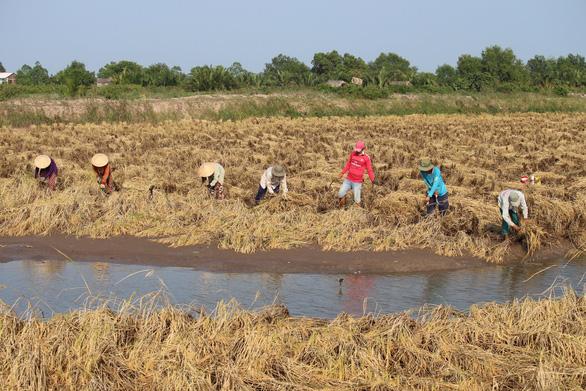 Ngân hàng Thế giới đề nghị ĐBSCL giảm diện tích trồng lúa - Ảnh 1.