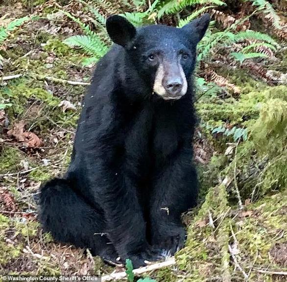 Gấu con bị bắn chết vì 'quá thân thiện', hay chụp ảnh selfie với người - Ảnh 1.