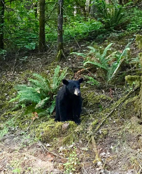 Gấu con bị bắn chết vì 'quá thân thiện', hay chụp ảnh selfie với người - Ảnh 3.